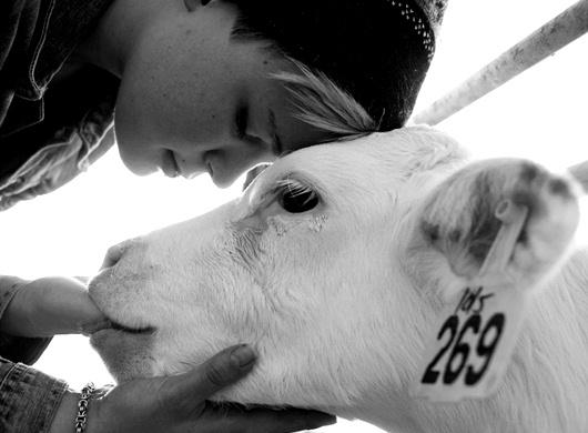 Mi forma de entender el veganismo